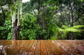 Wooden Boards and Forest — Stockfoto