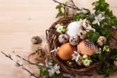 Œufs dans un nid — Photo
