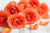 Bukett av rosor orange — Stockfoto