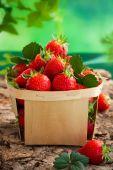 świeże truskawki — Zdjęcie stockowe