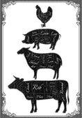 Diagram cut carcasses of chicken, pig, cow, lamb — Stock Vector