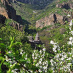 Armenian monastery of Geghard in flowers — Stock Photo #61298201