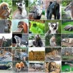 Collage photos of some wild animals — Stock Photo #54663127