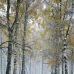 Snowstorm in autumn city park — Stock Photo #55843257