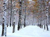 Snow in october — 图库照片