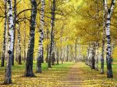 Pathway in golden autumn park — 图库照片