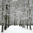 Alley winter trees — Stock Photo #60987471