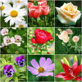 Collage of different beautiful flowers — Stock Photo