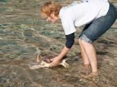 Marine turtle — Stock Photo