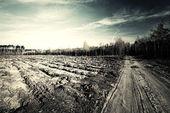 Rural landscape — Stock Photo