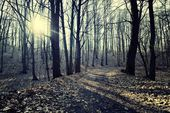 Road in forest in vintage style. — Stock Photo