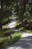 Concrete path winding through pine trees — Stock Photo