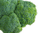 Isolated head of farm fresh broccoli — Stock Photo
