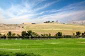 Farmland with center pivot vs sprinkler irrigation — Stock Photo