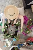 Woman gardener transplanting nursery seedlings — Stock Photo