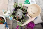 Lady gardener transplanting petunias — Stock Photo