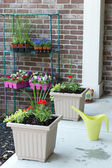 Newly planted spring flowers in flowerpots — Stock Photo