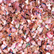 Background texture of colored wood shavings — Stock Photo #73627301