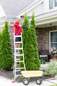 Senior Man Cutting Thuja Using Hedge Trimmer — Stock Photo