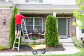 Yard work around the house trimming Thuja trees — Stock Photo