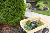 Using a hedge trimmer to trim Arborvitaes — Stockfoto