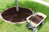 Mulch work around the trees — Stock Photo