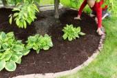 Gardener doing mulch work around the house — Stock Photo
