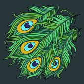 Peacock feathers vector — Vecteur