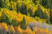 Beautiful Fall Background — 图库照片