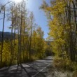 Road to Aspen Colorado Fall Colors — Stock Video #59676143