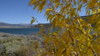 Yellow Fall Tree Moved by wind with Twin lake in the back Colorado Landscape — Stock Video