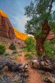 Canyon Wall Lid by sunset light Beautiful Coyote Gulch landscape — Stock Photo