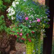 Hanging basket full of colorful summer plants. — Stok fotoğraf #69341231