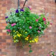 Basket of colorful plants hanging against a wall — Stockfoto #69341233