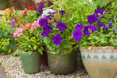 Colorful potted plants in garden corner. — Stock Photo