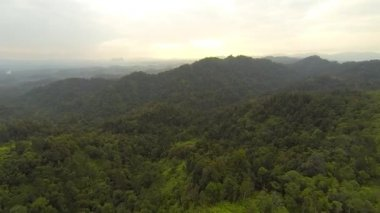 Aerial view of tropical rain forest — Stock Video
