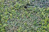 Grass full frame — Stock Photo