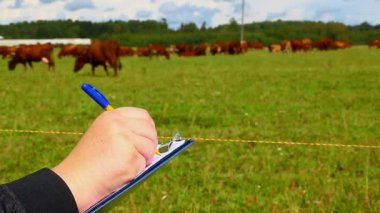 Farmer writing near the cows — Stock Video
