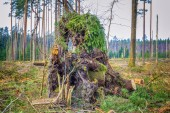 Destroyed forest in autumn — Stock Photo