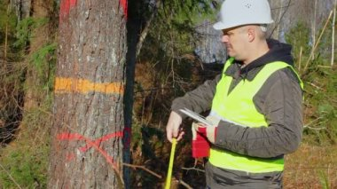 Forest engineer with a tablet PC and tape measure near tree — 图库视频影像