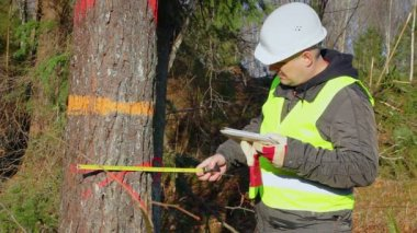 Forest engineer working with a tablet PC near tree in forest — Vídeo de stock