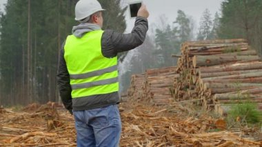 Forest Officer filmed piles of logs with tablet PC — Stok video