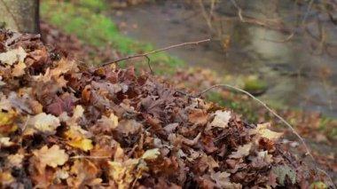 Old autumn leaves near river — Vídeo de Stock