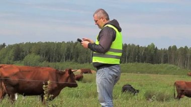 Farmer with tablet PC near cows at pasture — Stock Video