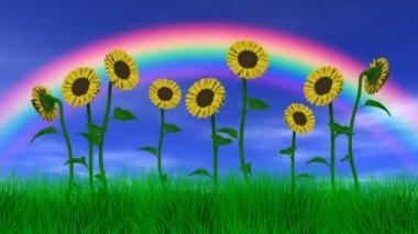 虹の下のひまわり — ストックビデオ