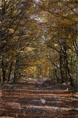 Curving road in autumn forest - vintage photo  — Stock Photo