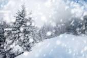 Noel arka plan karlı köknar ağaçlarıyla — Stok fotoğraf