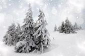 雪のモミの木とクリスマスの背景 — ストック写真