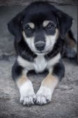 Cute dog are looking — Photo