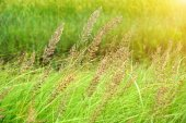 Wild grass in the nature. — Stock Photo